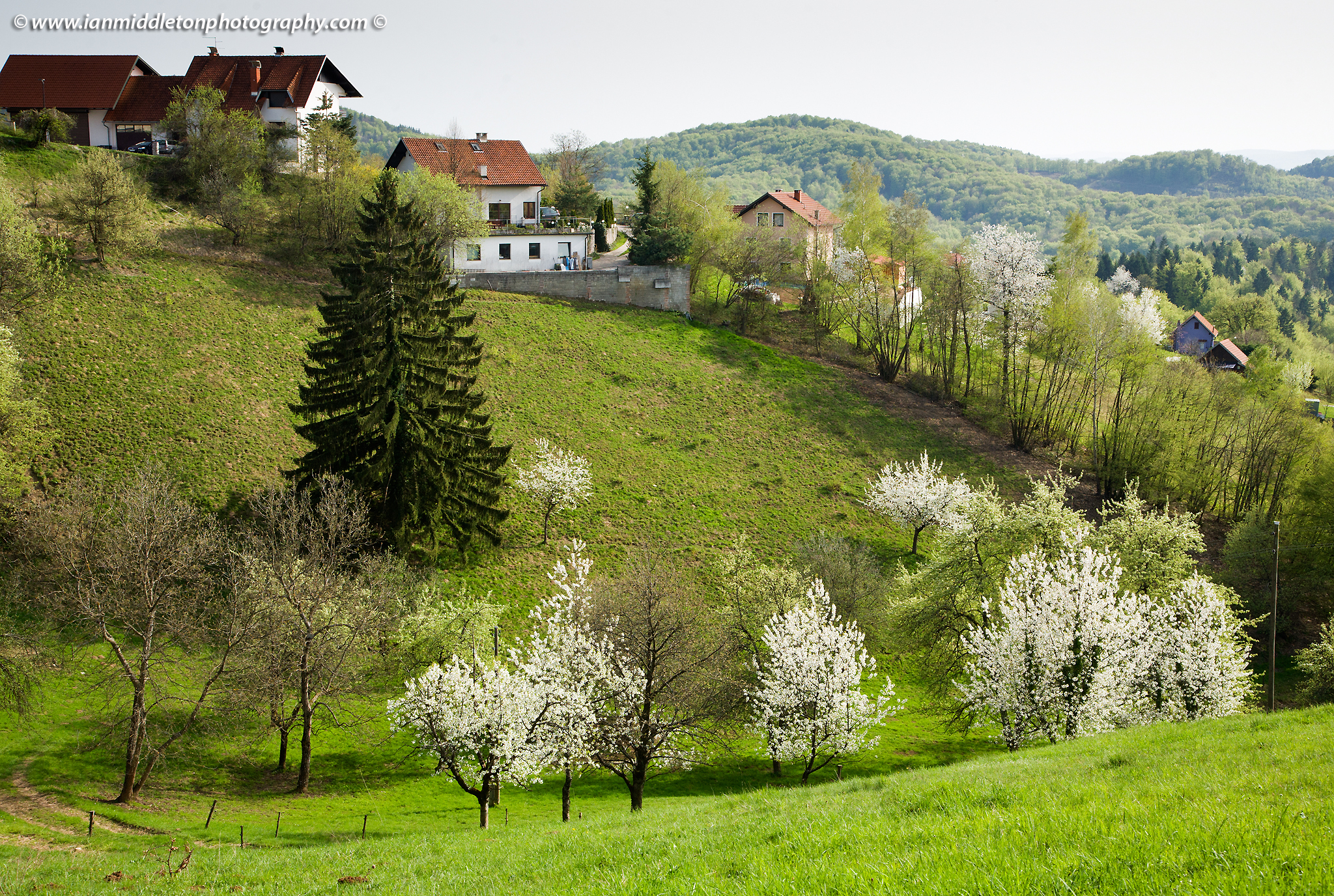 Trees blossoming in Spring near Volavlje in the Jance hills to the east of Ljubljana, Slovenia.