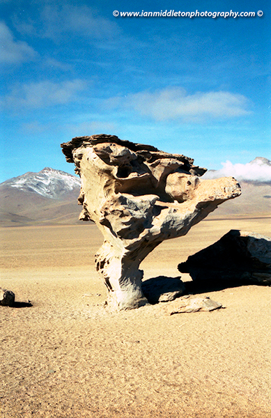 Tree of Stone, Bolivian Altiplano