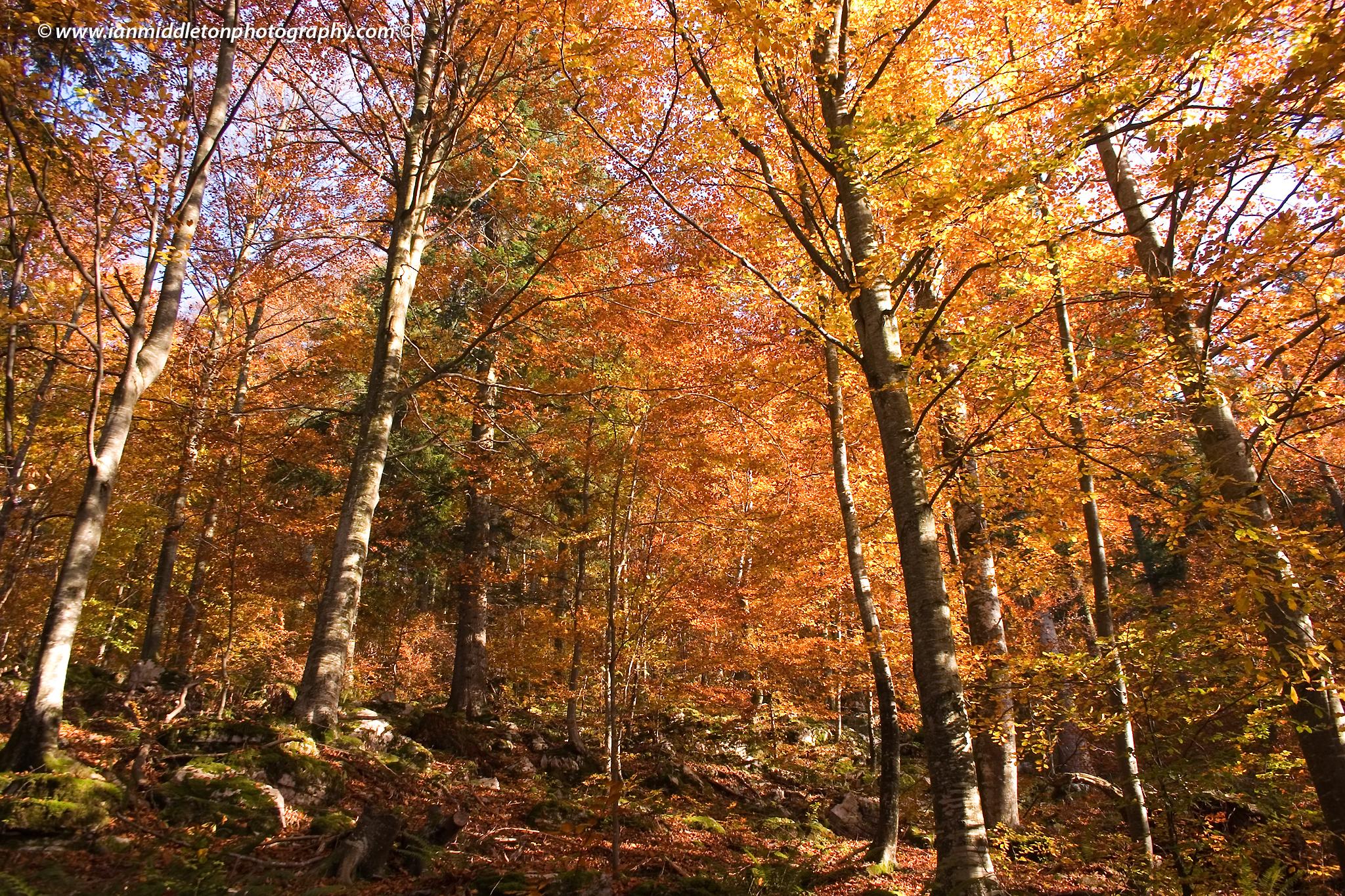 Kocevje forest in autumn, Slovenia