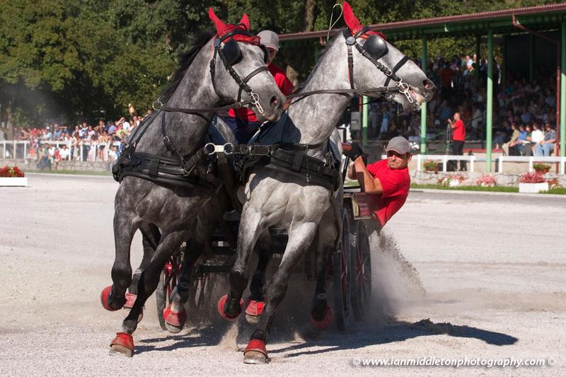 The world famous Lipizzaner horses.