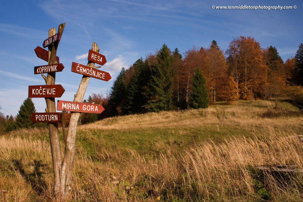 Kočevski Rog, the forest of Kočevje, Dolenjska, Slovenia.