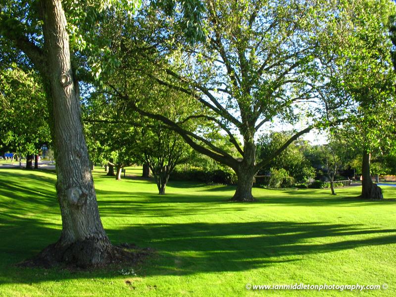 Kuirau Park, Rotorua, New Zealand.