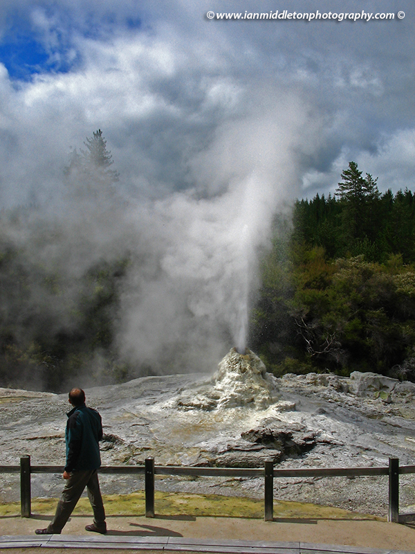 Lady Knox geyser at Wai-O-Tapu Thermal Wonderland