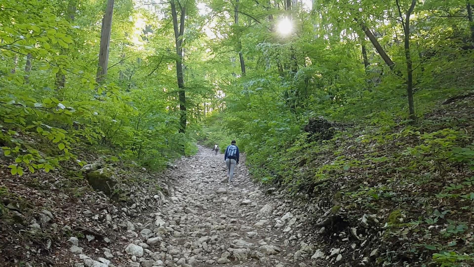 Ojstrica trail